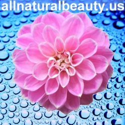 "Pink Dahlia 250 x 250 Banner Ad For ""all natural beauty.us"""