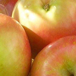 اموزش انواع ماسک میوه برای شادابی و طراوت پوست