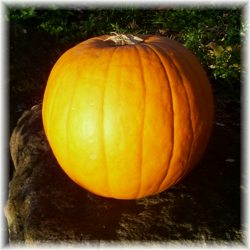 pumpkin beauty recipes