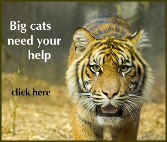 Help save the big cats